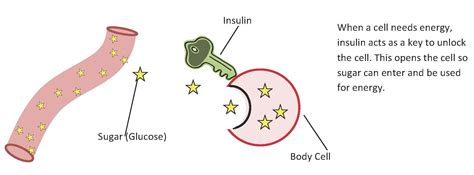 human liver how it works picture 7