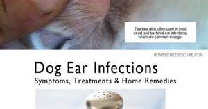 dog and home remedy for microbial infection picture 5