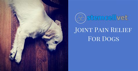 canine pain relief picture 13