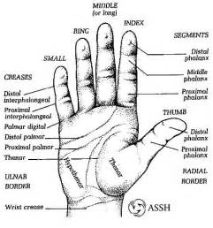 metacarpal phalangeal joint measurement picture 2