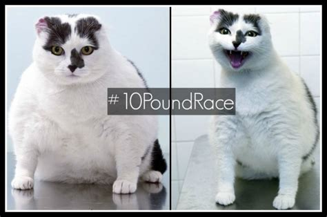 weight loss in cats picture 9