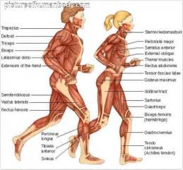 testosterone uses bodybuilding picture 15