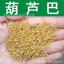 whole fenugreek seed bulk picture 7