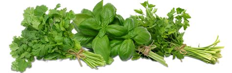 where can i buy puertorican herbs here in picture 4
