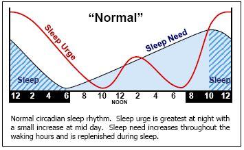 circadian sleep rhythm picture 13