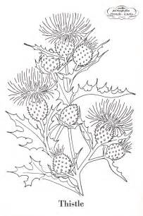 thistle pattern picture 2