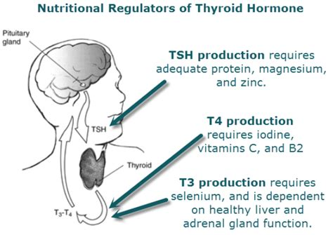iodine and thyroid gland picture 6