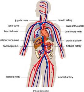 causes of reverse blood flow picture 3