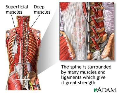 back muscle and tendon pain picture 5