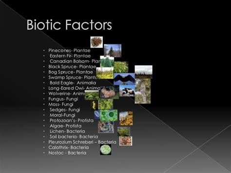 fungi facts picture 13