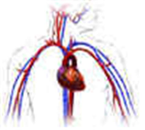 free blood flow animations picture 15