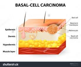 skin cell diagrams picture 1