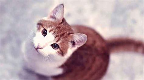 cat hyperthyroid joint pain relief picture 17