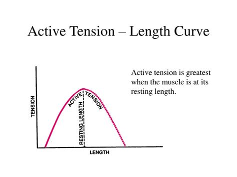 definition of passive muscle tension picture 19
