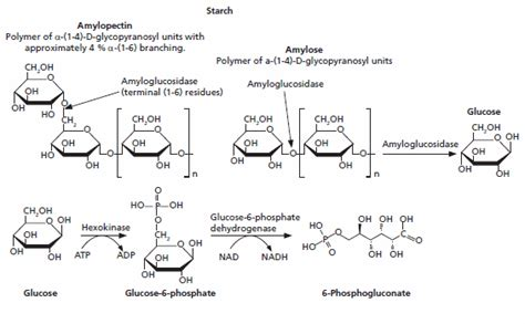 acid hydrolysis of starch picture 13