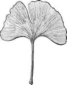 ginkgo leaf clip art picture 10