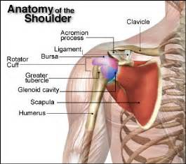 shoulder joint pain picture 15