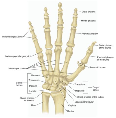 first finger joint pain picture 1