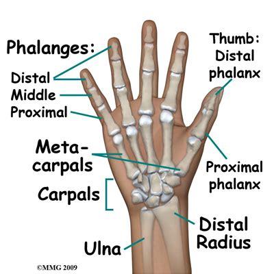 injury proximal phalanges metacarpal phalangeal joint picture 1