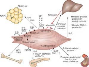 secretory organ picture 1