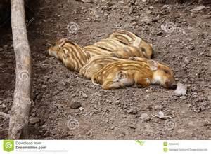 newborn sleep picture 1