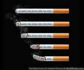 what kills smoke ordes picture 3
