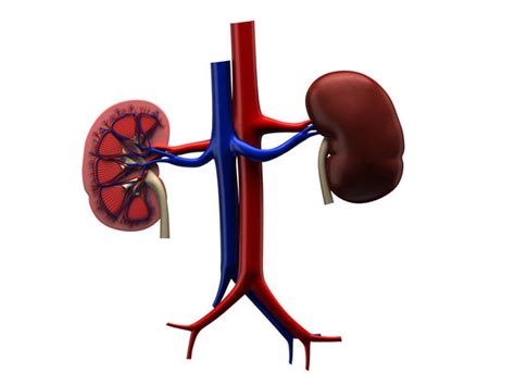 fat burners and kidney stones picture 14