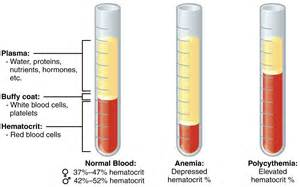 elevated liver function tests, low platelets, low hematocrit picture 2