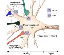 antidepressant muscle pain picture 3