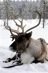 deer estrace picture 11