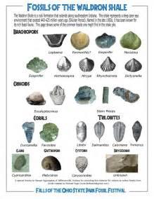 ohio h fossils picture 7