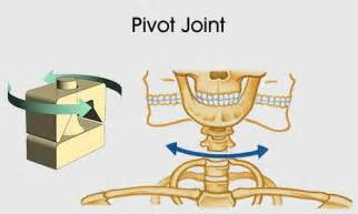 pivot joint picture 1