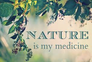herbal medicine quotes picture 5