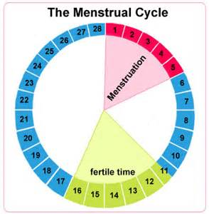 menstrual cycle simulator for men picture 6