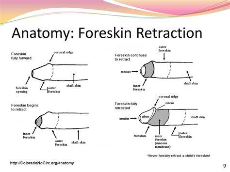 retractile penis picture 7