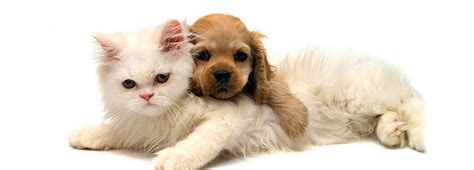 treatment of idb in cats picture 10