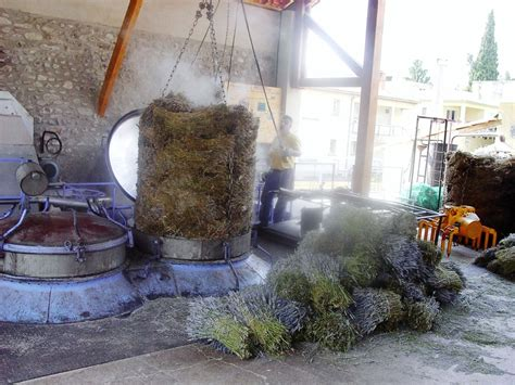 distilling oils from herbs with butane picture 11