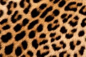 lleopard skin picture 3