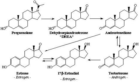 testosterone hormone growth picture 3