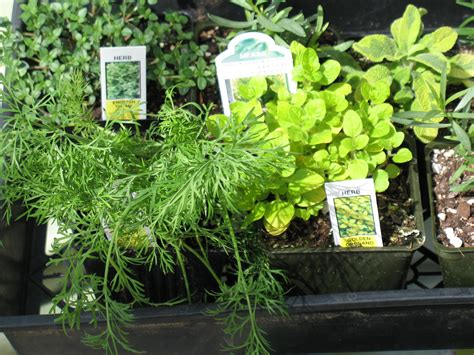 any herbs equal to vicodin picture 15