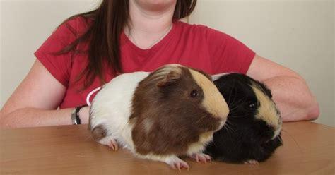 pig illness 2014 picture 15