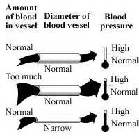 high blood pressure related to liver picture 15