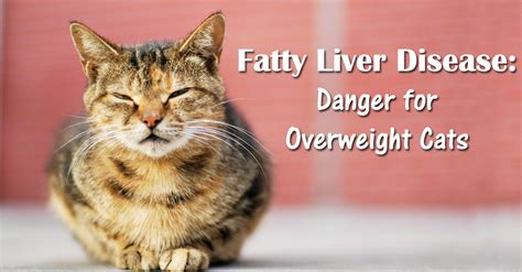 cat health liver picture 3