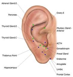 acupuncture thyroid gland picture 6