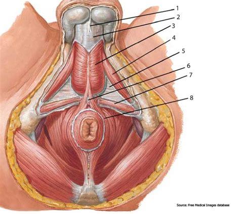 penis in vagina diagram picture 3