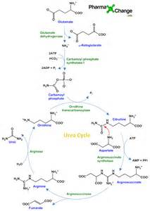 a chemical found in the urine called urea, picture 18