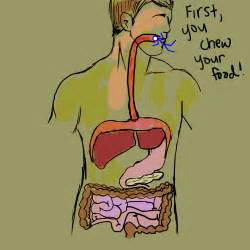 body going through digestion picture 6