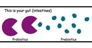 probiotics vampire fungus in stomack picture 7