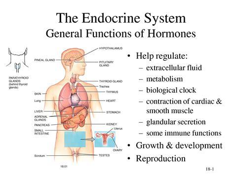 hormone defnitoin quizlet picture 5