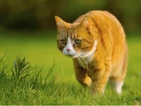 feline h picture 7